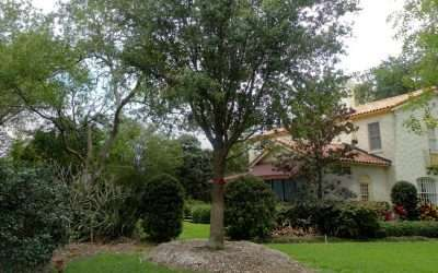 Keeping Your Florida Trees Healthy in the Summer: 5 Things The Tree Planters want you to Know