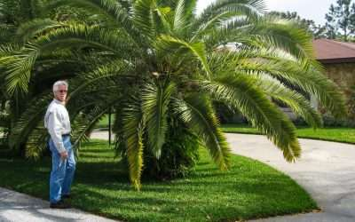 The Tree Planters Advice on How to  Fertilize Your Palm Trees
