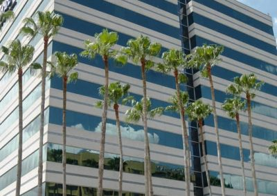 palms at office building