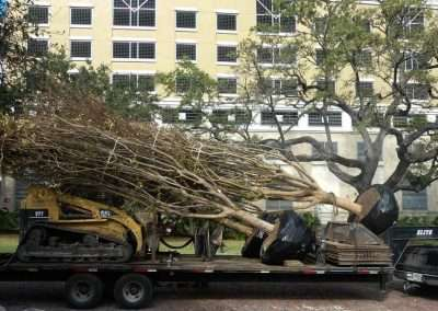 Palms being delivered