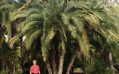 Four of Central Florida's Best Exotic Palms For Your Landscape