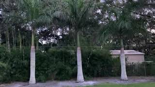 Royal Palms 25′